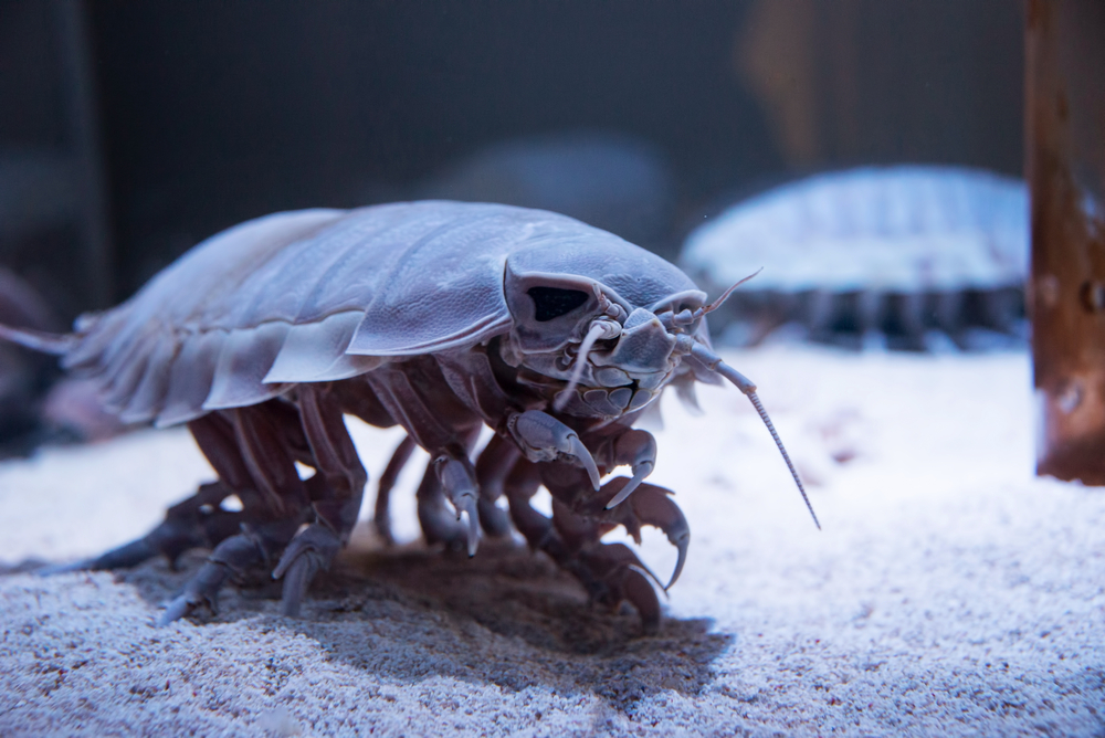 20 Strange Animals You (Probably) Didn't Know Existed ...